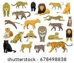 various wild cat panthera... | Shutterstock .eps vector #678498838