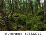 shirakoma moss forest in nagano ... | Shutterstock . vector #678522712