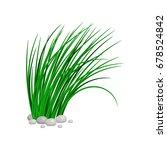 Bush Of Tall Green Grass...
