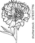 vector illustration of peony on ... | Shutterstock .eps vector #678537796