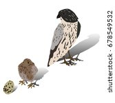 falcon and her child  and egg.... | Shutterstock .eps vector #678549532