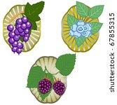 Blue berries - stock vector
