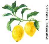 bright watercolor lemon tree... | Shutterstock . vector #678569272
