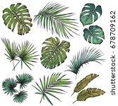 set of tropical leaves.... | Shutterstock .eps vector #678709162