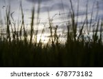 green wheat field and sunny day | Shutterstock . vector #678773182