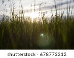 green wheat field and sunny day | Shutterstock . vector #678773212