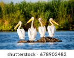 pelican colony in danube delta... | Shutterstock . vector #678902482