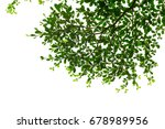 isolated green leaf on white