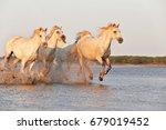 Running Horses On Water