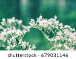 beautiful wild flowers | Shutterstock . vector #679031146