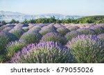 lavender flowers blooming field ...   Shutterstock . vector #679055026