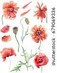 wildflower poppy flower set. ... | Shutterstock . vector #679069336