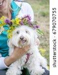maltese dog in the countryside | Shutterstock . vector #679070755