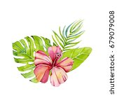 tropical flowers and leaves....   Shutterstock . vector #679079008