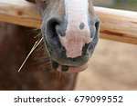the nostrils of the horse | Shutterstock . vector #679099552