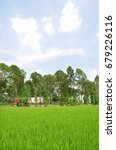rice paddy in the farm .... | Shutterstock . vector #679226116