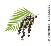 branch with acai berries and... | Shutterstock .eps vector #679323382
