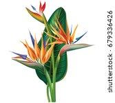 Stock photo tropical arrangement with strelitzia flowers raster version 679336426