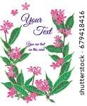 pink flower card design. violet ... | Shutterstock .eps vector #679418416