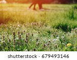 flowers and blurred people...   Shutterstock . vector #679493146