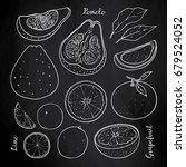 tropical citrus fruits set...   Shutterstock .eps vector #679524052
