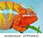 chameleon lizard | Shutterstock . vector #679534612