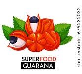 guarana vector icon. healthy... | Shutterstock .eps vector #679535032