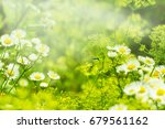 picture with wild flowers and... | Shutterstock . vector #679561162