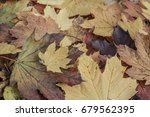 autumn background | Shutterstock . vector #679562395