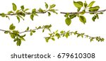 branch of an apple tree with... | Shutterstock . vector #679610308