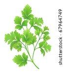 parsley branch | Shutterstock .eps vector #67964749