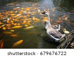 Geese  Gosling And A Group Of...