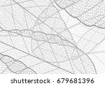 dried leaf embroidery lace... | Shutterstock .eps vector #679681396