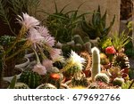 colorful cactus blooming | Shutterstock . vector #679692766