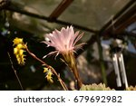 colorful cactus blooming | Shutterstock . vector #679692982