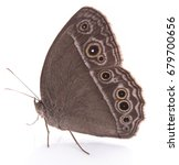 butterfly isolated on white... | Shutterstock . vector #679700656