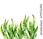 border with sansevieria leaves. ... | Shutterstock . vector #679711492