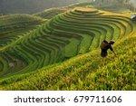 Morning Light Of Rice Field On...