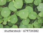 green leaves texture | Shutterstock . vector #679734382