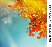 autumn leaves | Shutterstock . vector #679783915