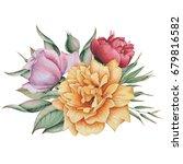 hand painted watercolor... | Shutterstock . vector #679816582
