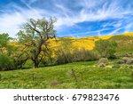 Spring Wildflowers Near Carriz...