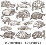 turtles  tortoises  animals.... | Shutterstock . vector #679848916