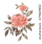 watercolor peony on a white... | Shutterstock . vector #679869802