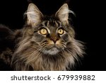 close up portrait of adorable... | Shutterstock . vector #679939882