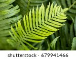 a ray of sunlight catches a...   Shutterstock . vector #679941466