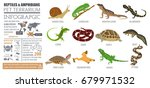 pet reptiles and amphibians... | Shutterstock .eps vector #679971532