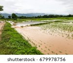 agriculture rice field flooded... | Shutterstock . vector #679978756