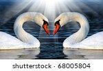 loving swans | Shutterstock . vector #68005804