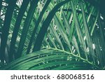 tropical palm leaf  dark green... | Shutterstock . vector #680068516